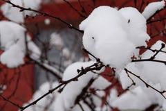 snowdrift Royaltyfri Fotografi