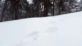Snowdrifts σε ένα δάσος - χειμώνας Στοκ φωτογραφίες με δικαίωμα ελεύθερης χρήσης