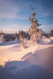 Snowdrifts σε ένα χειμερινό δάσος Στοκ Εικόνα