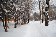 Snowdrifts στην οδό Στοκ Εικόνες