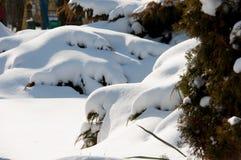 Snowdrifts στους θάμνους Στοκ φωτογραφίες με δικαίωμα ελεύθερης χρήσης