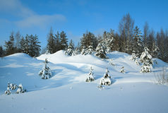 Snowdrifts. Winter wood brought by snowdrifts Royalty Free Stock Photos