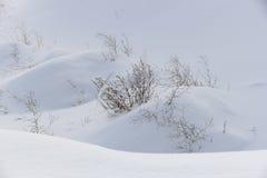 snowdrifts Royaltyfri Fotografi