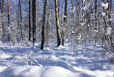 Snowdrifts in forest Royalty Free Stock Photography