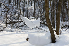 Snowdrifts in the forest Royalty Free Stock Photography