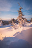 Snowdrifts in a winter forest Stock Image