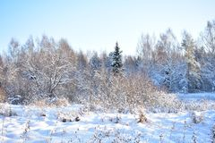 Snowdrifts in the winter forest are deep and fluffy, and almost no description of nature in winter can not do without their mentio. N - they can not escape, they stock image