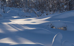 Snowdrifts in winter forest Stock Photos