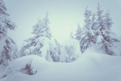 Snowdrifts in a winter forest Royalty Free Stock Photography