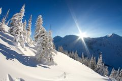 Snowdrifts on winter snow covered alp mountainside, fir trees on mountain hill top and sun shine glow in blue sky stock photos
