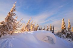 Snowdrifts in the woods Stock Photos