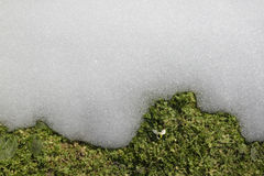 Snowdrop和熔化的雪 免版税图库摄影
