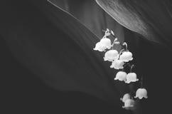 Snowdrop在庭院里 花森林春天白色 库存图片