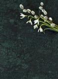 Snowdrop花和杨柳分支在Verde危地马拉使s有大理石花纹 免版税图库摄影