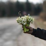 snowdrop花束在手上今后延伸了,在路一边 免版税库存照片