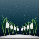 snowdrop предпосылки Бесплатная Иллюстрация