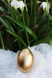 Snowdrop лужка пасхального яйца Стоковая Фотография RF