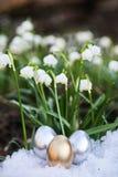 Snowdrop лужка пасхального яйца Стоковое Изображение