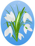 Snowdrop. Beautiful snowdrop on blue background Stock Images