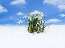 Snowdrop Photographie stock