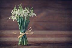 Snowdrop Foto de Stock Royalty Free
