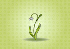 Snowdrop background Stock Photo
