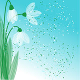 Snowdrop background Royalty Free Stock Photos