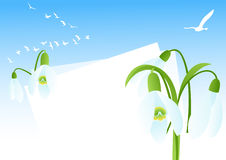 Snowdrop background Royalty Free Stock Photo