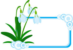 Snowdrop Banner. Vector illustration of Snowdrop banner or logo, isolated Stock Photo