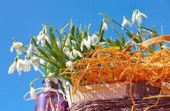 Snowdrop In Basket And Glass Royalty Free Stock Images