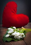 Snowdrop blomma Arkivbild