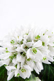 Snowdrop bouquet, white spring flowers on light background. Copy space Stock Photo