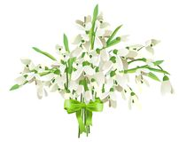 Snowdrop bunch. With green bow isolated on white background Royalty Free Stock Photos