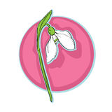 Snowdrop clip art Stock Photo