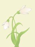Snowdrop común stock de ilustración