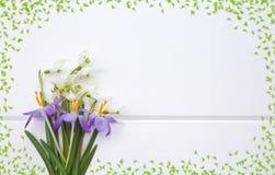 Snowdrop da mola e açafrão roxo Imagens de Stock