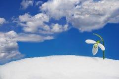 Snowdrop e cielo Fotografia Stock Libera da Diritti