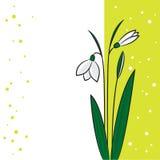 Snowdrop em uma luz - fundo verde Fotografia de Stock Royalty Free