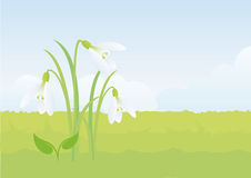 Snowdrop, the first flower of spring. Spring vector illustration. Gentle spring background with snowdrop. Fresh spring background. Background with snowdrop Stock Photos