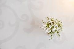 Snowdrop floresce no vaso no fundo branco do lustro com Orn Fotografia de Stock Royalty Free