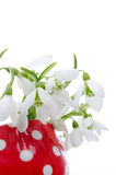 Snowdrop flower Royalty Free Stock Images