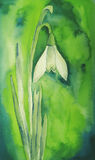 Snowdrop Flower. Snopdrop blossom, painted in watercolor technique, created by the photographer Royalty Free Stock Photo
