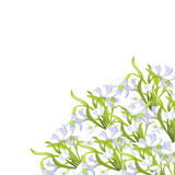 Snowdrop flower blossomed with leaves. Vector illustration Stock Images