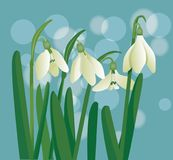 Snowdrop. Flower on the blue background, illustration, spring, vector Royalty Free Stock Photo