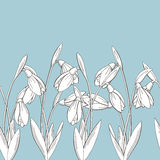 Snowdrop flower graphic blue color seamless background sketch illustration Stock Images