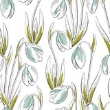 Snowdrop flower graphic color seamless pattern sketch background illustration vector. Snowdrop flower graphic color seamless pattern sketch background Stock Photo