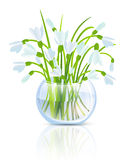 Snowdrop Flower Royalty Free Stock Photo