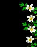 Snowdrop flower Royalty Free Stock Image