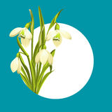 Snowdrop flowers Royalty Free Stock Photo