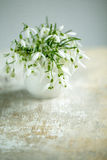 Snowdrop Flowers Royalty Free Stock Photos
